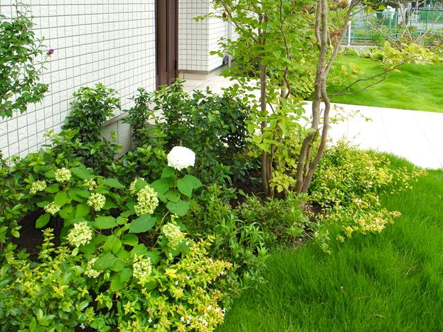 色鮮やかな植栽達