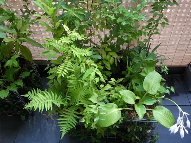 里山を想いだす植物たち