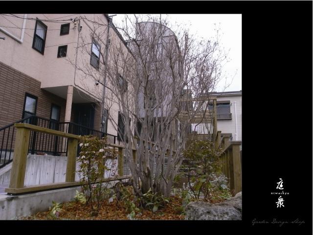 樹齢100年のヤマツツジが迎える